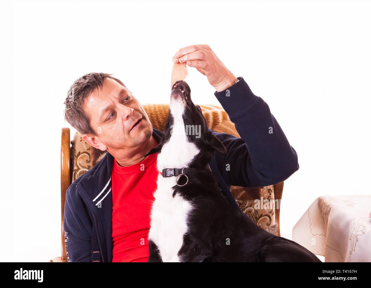 Man feeding dog with ham - isolated - Stock Image