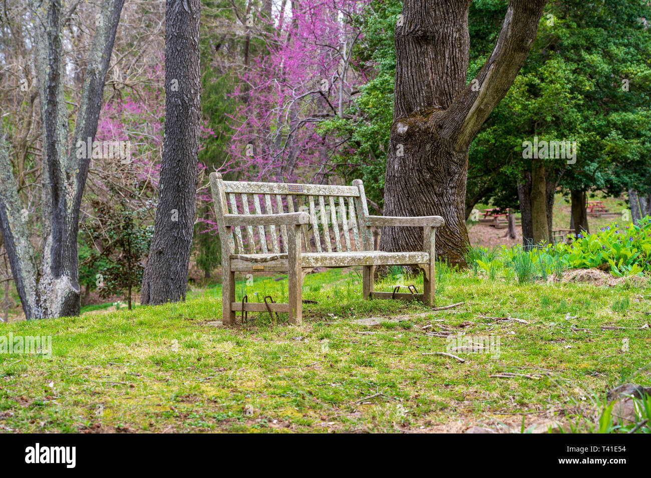 Brilliant A Wooden Park Bench Sits In A Garden Surrounded By Trees And Caraccident5 Cool Chair Designs And Ideas Caraccident5Info