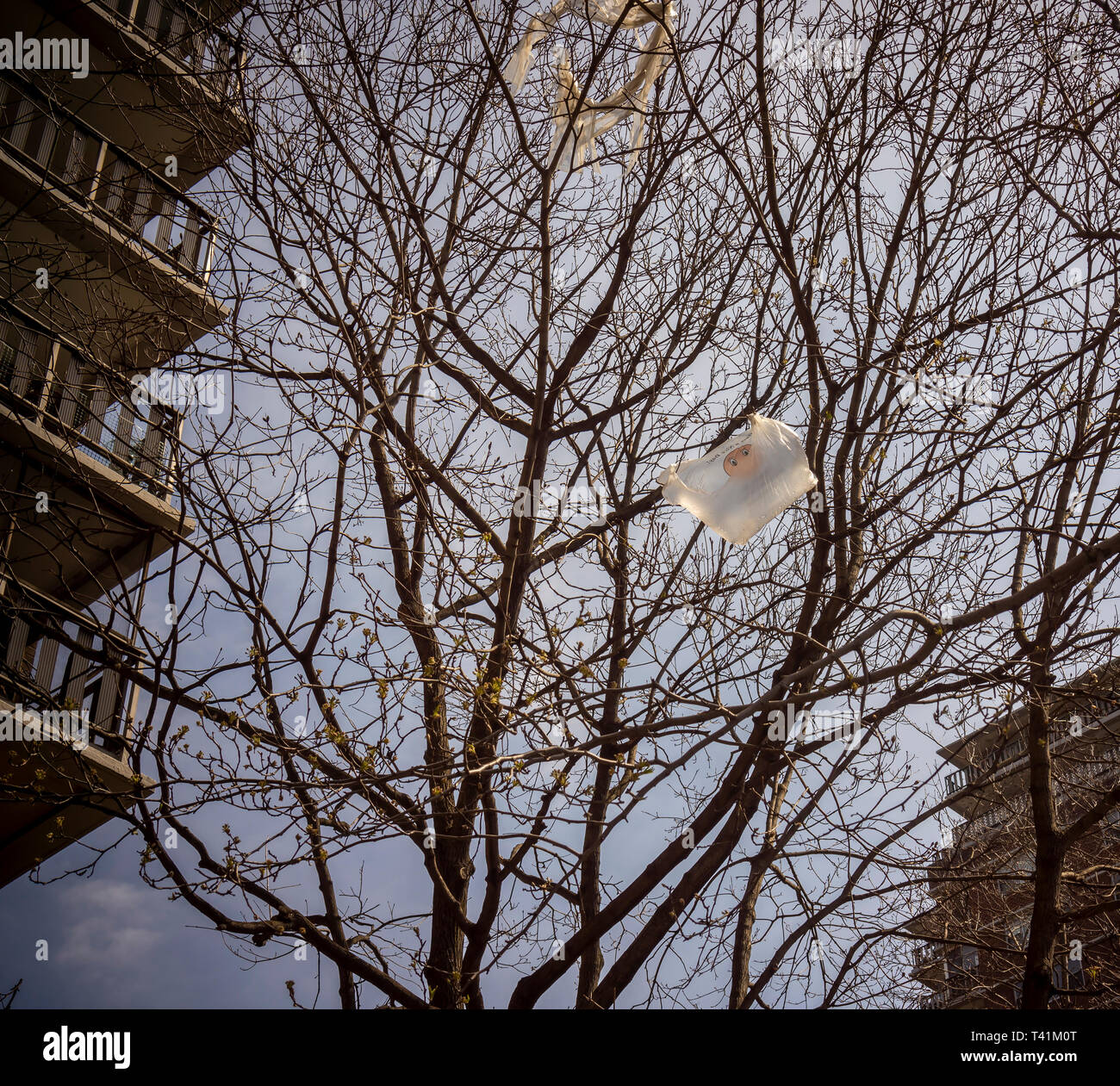 A plastic bag, caught in a tree in New York on Sunday, April 7, 2019. New York State lawmakers have approved a statewide ban on single-use plastic bags involved in retail sales. The ban, unless overturned, will take effect march 2020. (© Richard B. Levine) - Stock Image
