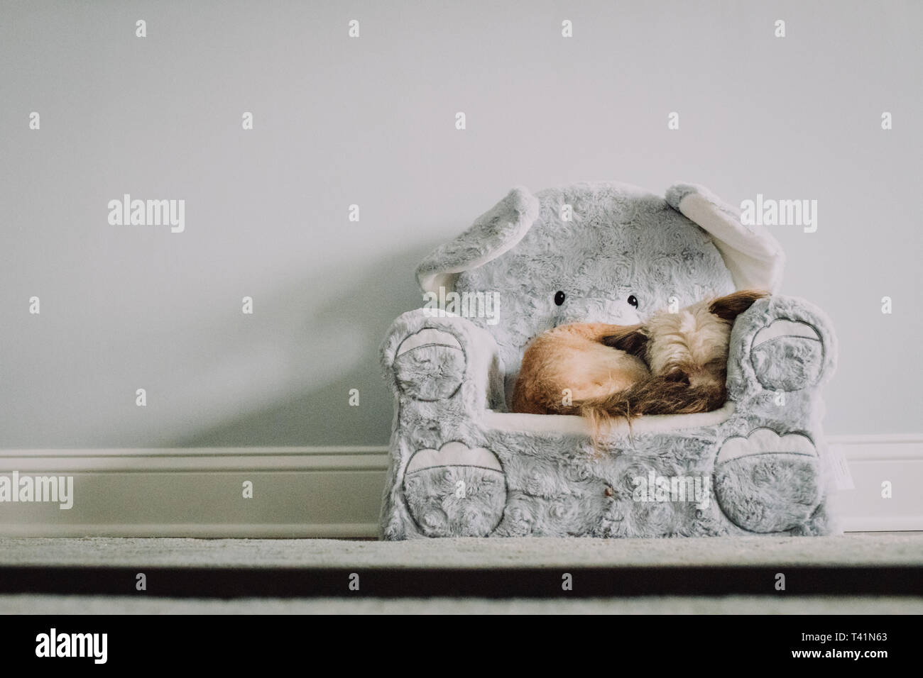 Little dog sleeping in chair - Stock Image
