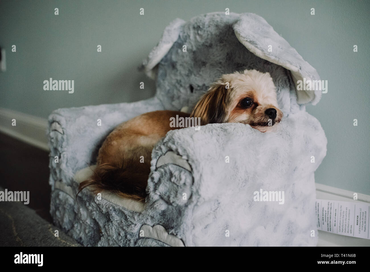 Little dog in chair - Stock Image