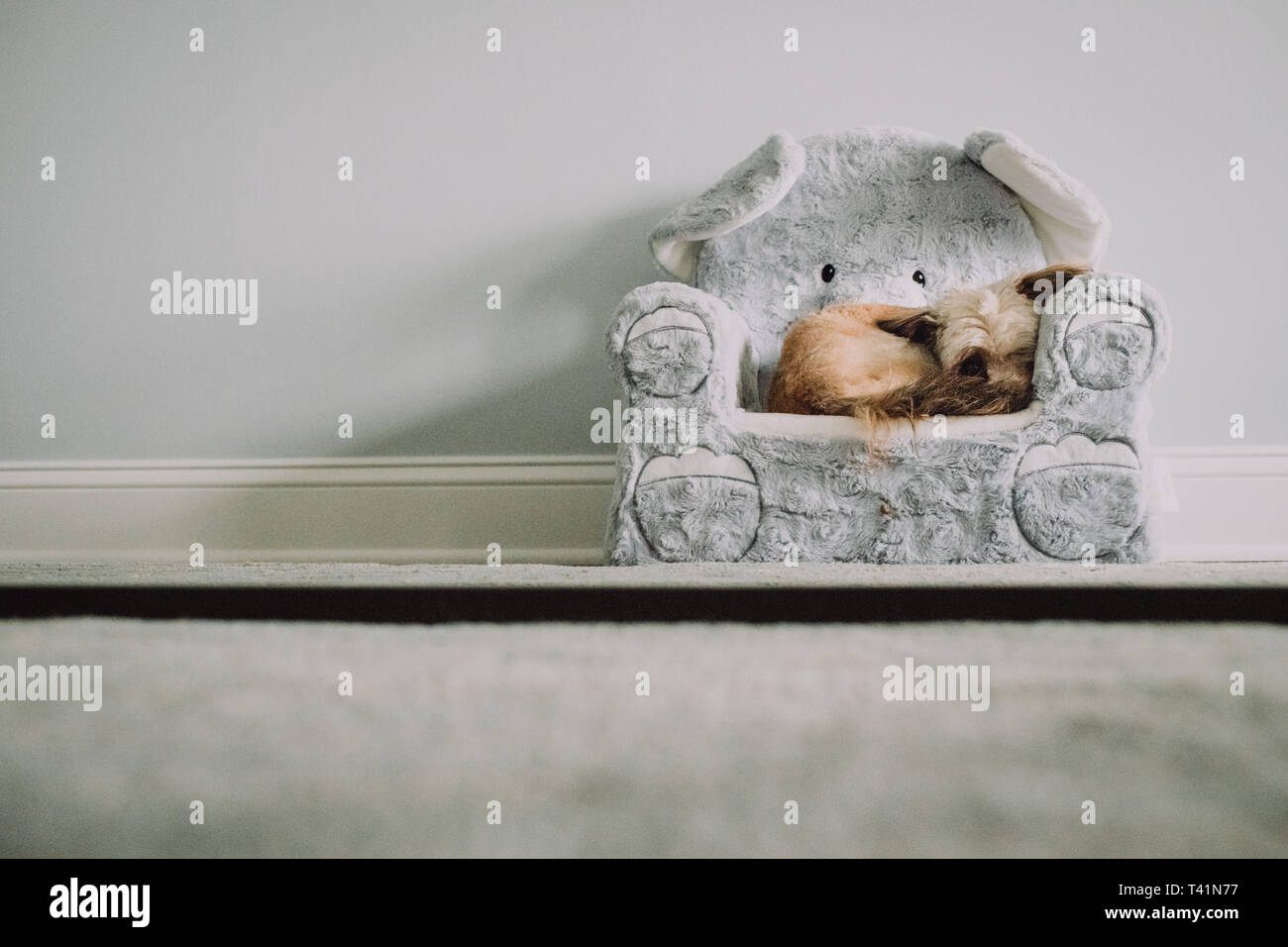Tiny dog in tiny chair - Stock Image