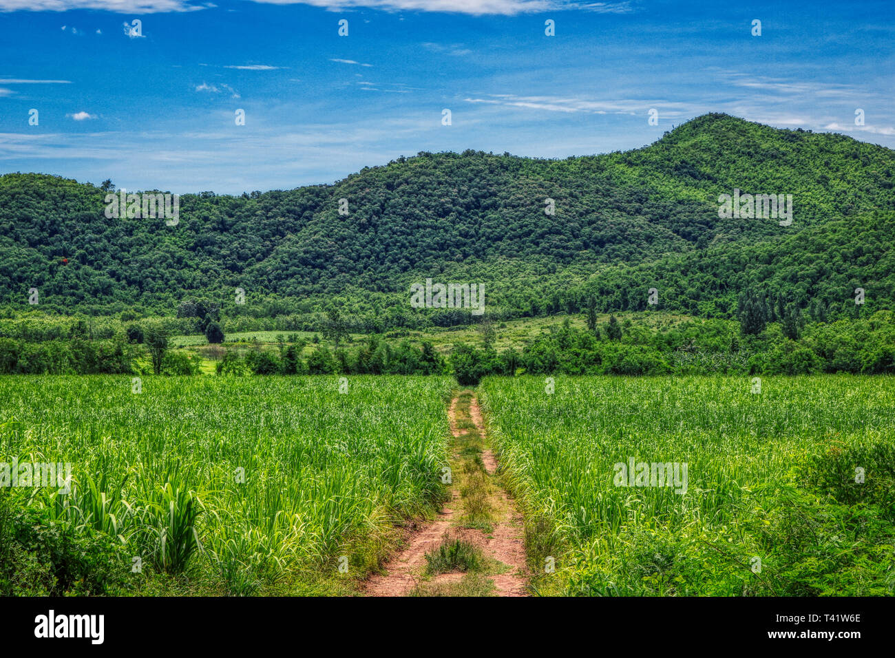 This unique image shows the road in nature with hills and trees to the Kaeng Krachan National Park in Thailand Stock Photo