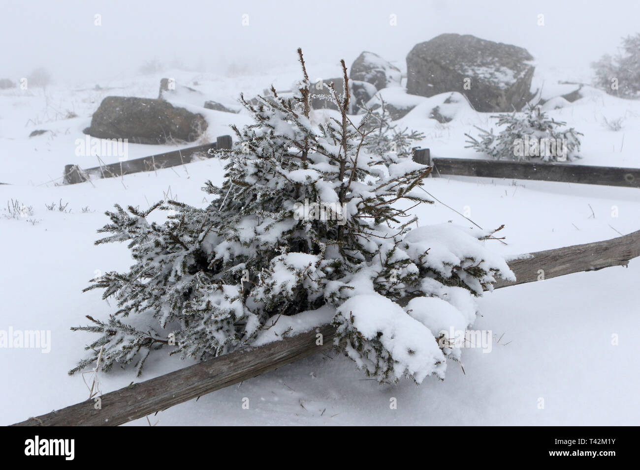 Schierke, Germany. 13th Apr, 2019. A thick layer of snow on the Brocken. Winter returned to Saxony-Anhalt for a brief interlude. Credit: Matthias Bein/dpa-Zentralbild/dpa/Alamy Live News - Stock Image