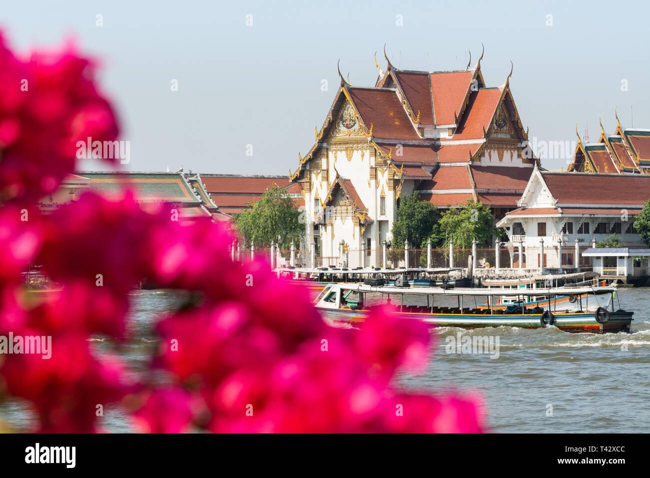 View over Wat Rakang Kositaram Woramahawihan temple and Chao Phraya river through flowers in Bangkok, Thailand. Blurry foreground, shallow depth of fi - Stock Image