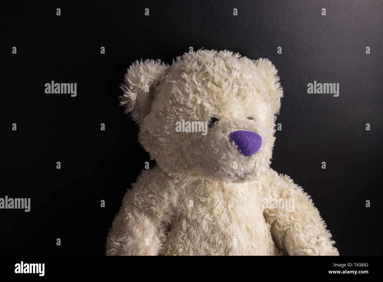 8e931afbc White custom hand made Teddy Bear with purple nose on dark background -  Stock Image