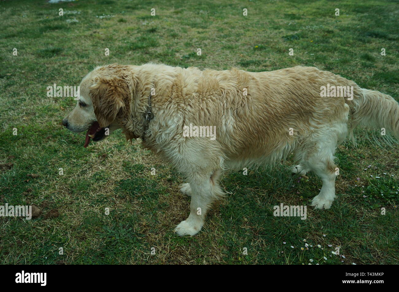 De Pie High Resolution Stock Photography And Images Alamy