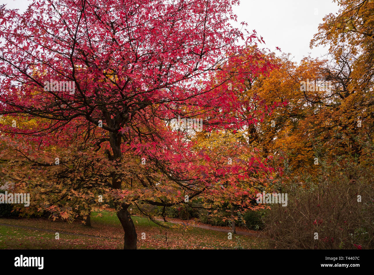 A scenic view of the colourful autumn trees in Valley Gardens in  Harrogate,England,UK Stock Photo