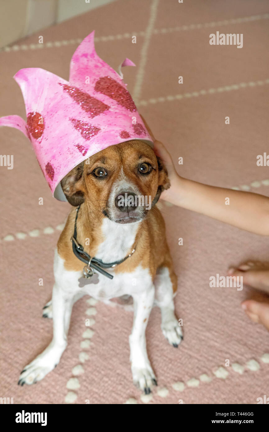 A mixed breed dog wearing a crown - Stock Image