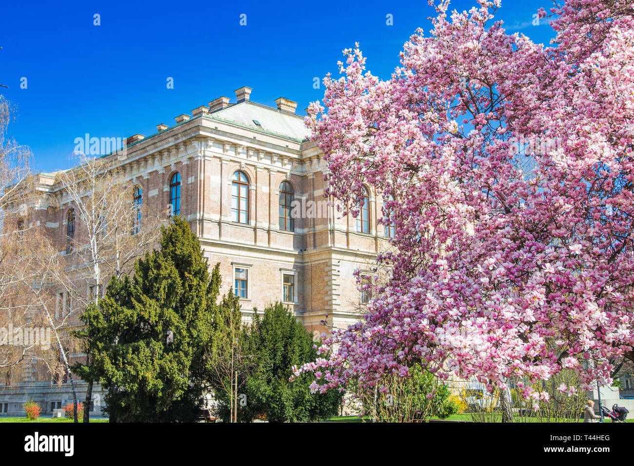 Spring in Zagreb, Croatia, academy of science and arts and magnolia blossom in park in beautiful spring day Stock Photo