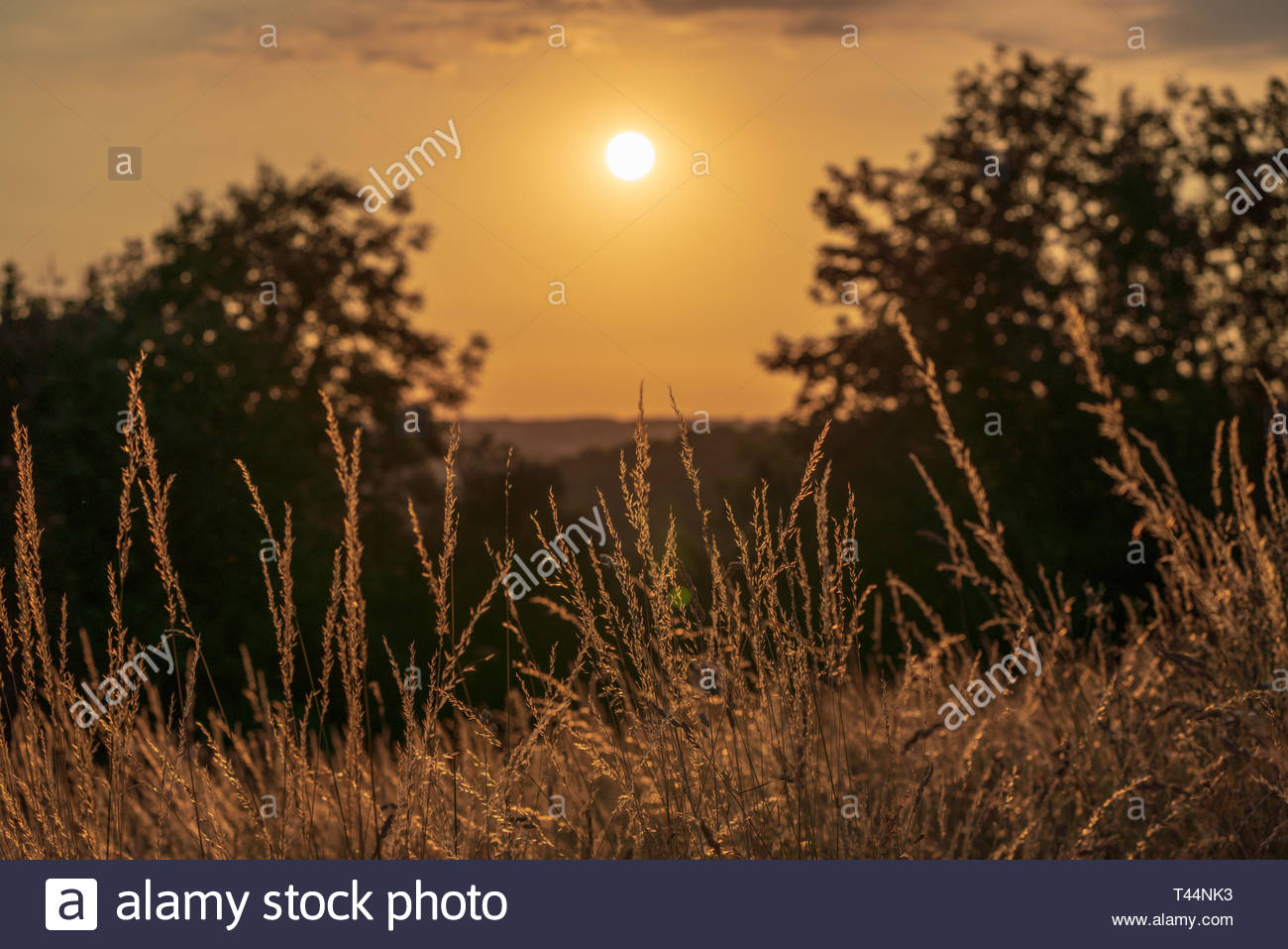 Countryside of the Chiltern Hills in England at sunset - Stock Image