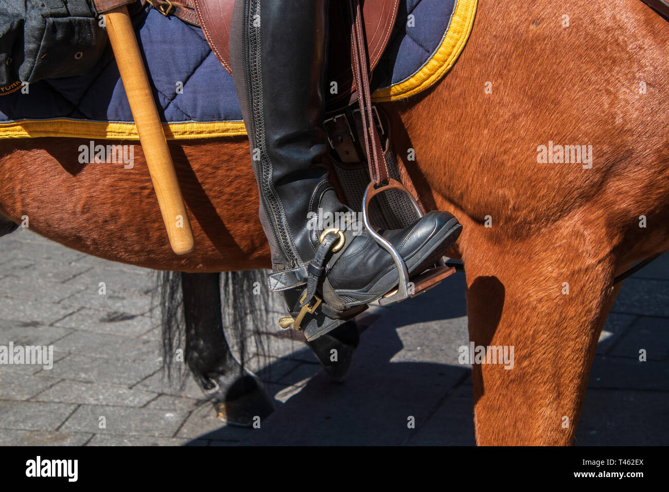 266ca3dc675f Side of beautiful brown horse with police riding boot in stirrup. The  horse s blanket is