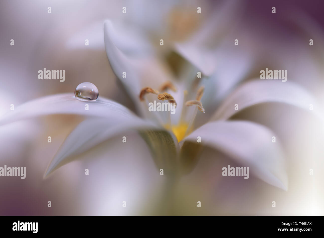 Beautiful Nature Background Colorful Artistic Wallpaper Natural Macro Photography Beauty In Nature Creative Floral Art Blurred Space For Your Text Stock Photo Alamy