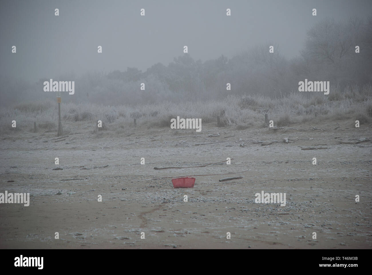 Icy forest enveloped by fog, view of the forest from the beach in winter season - Stock Image