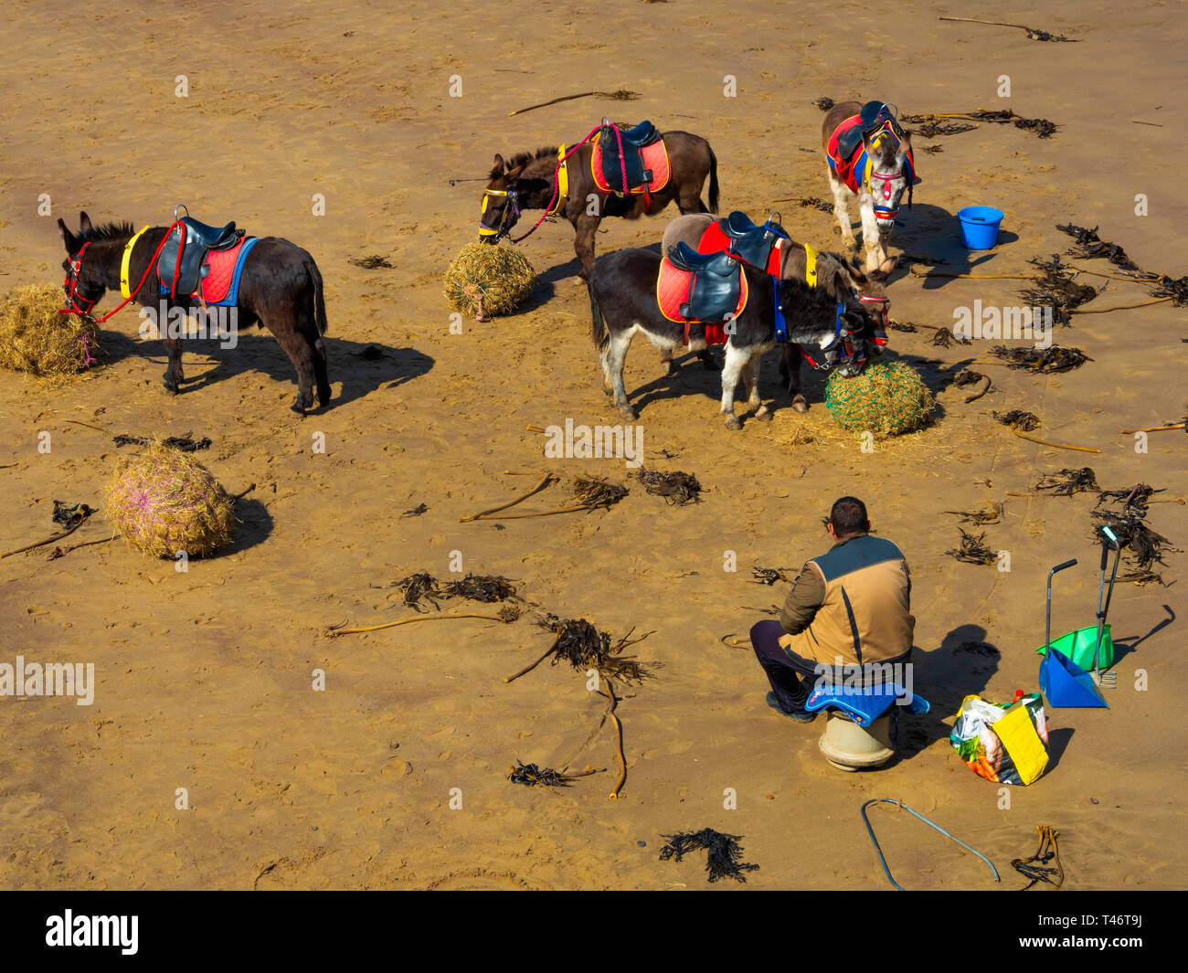 Donkey man on Whitby West Beach with his donkey's enjoying a rest and a feed of fresh hay Stock Photo