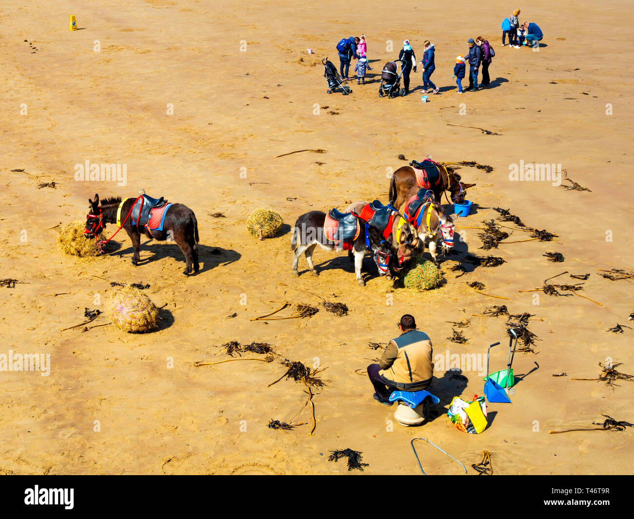 Donkey man on Whitby West Beach with his donkey's enjoying a rest and a feed of fresh hay with families passing Stock Photo