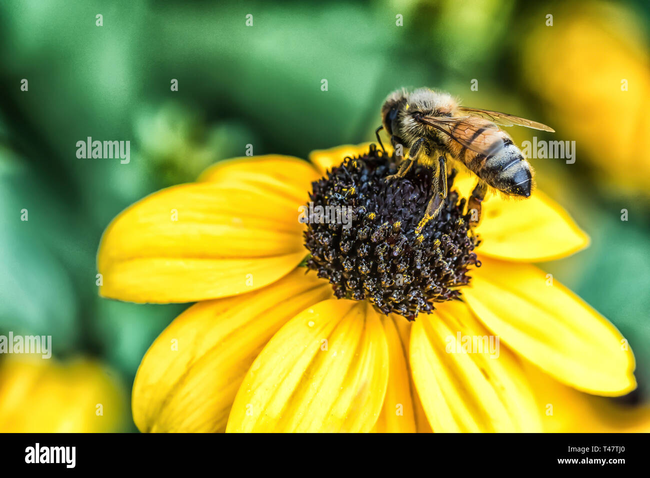 Busy Bee - Stock Image