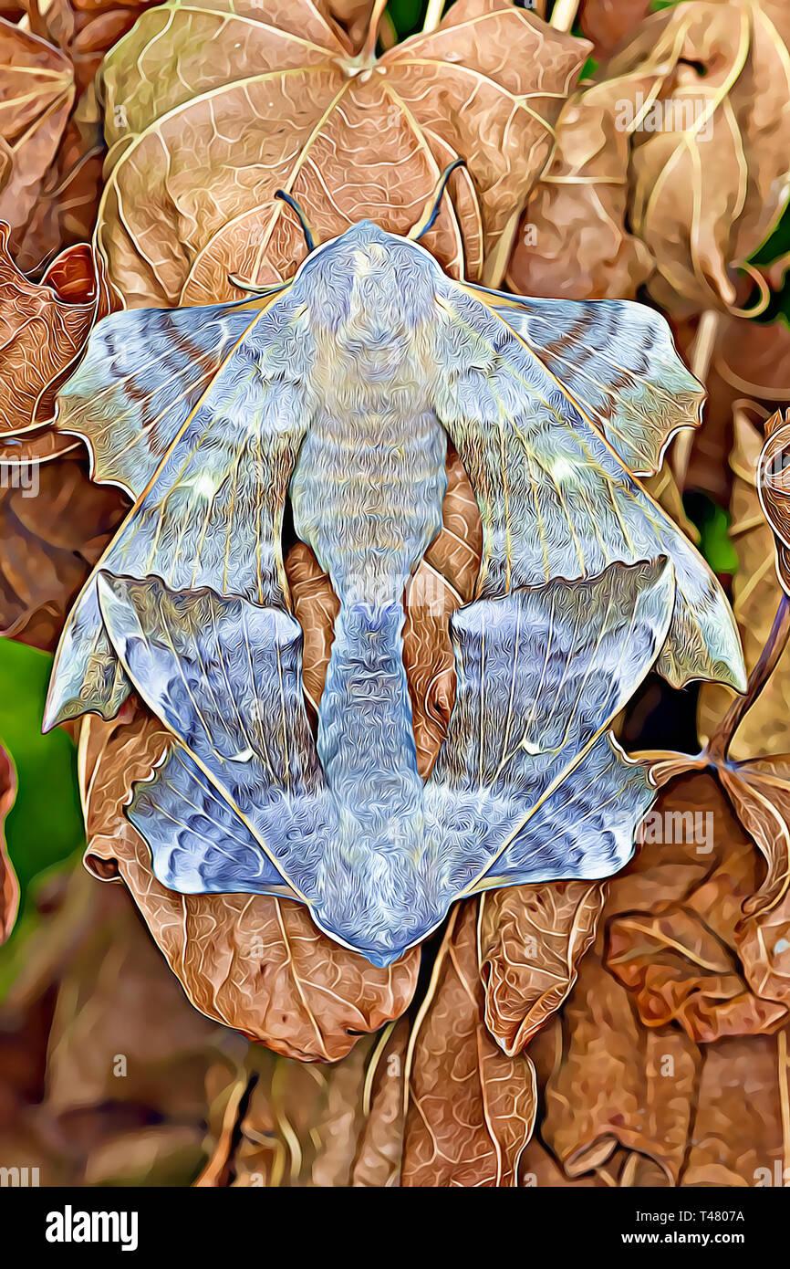 Poplar Hawk Moths mating (Digital art) - Stock Image