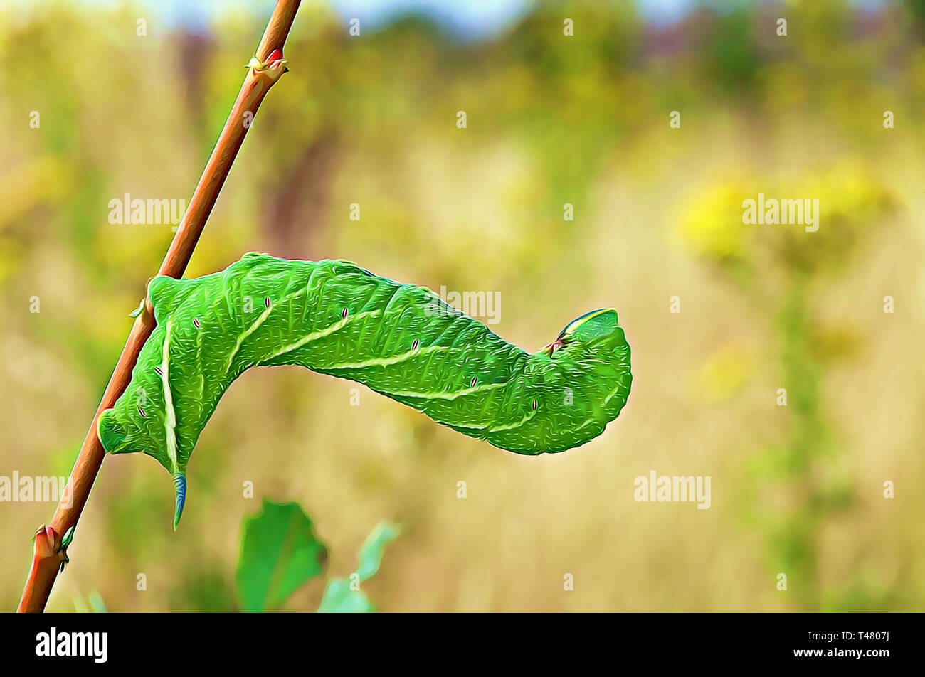 Eyed Hawk Moth caterpillar (Digital art filter) - Stock Image
