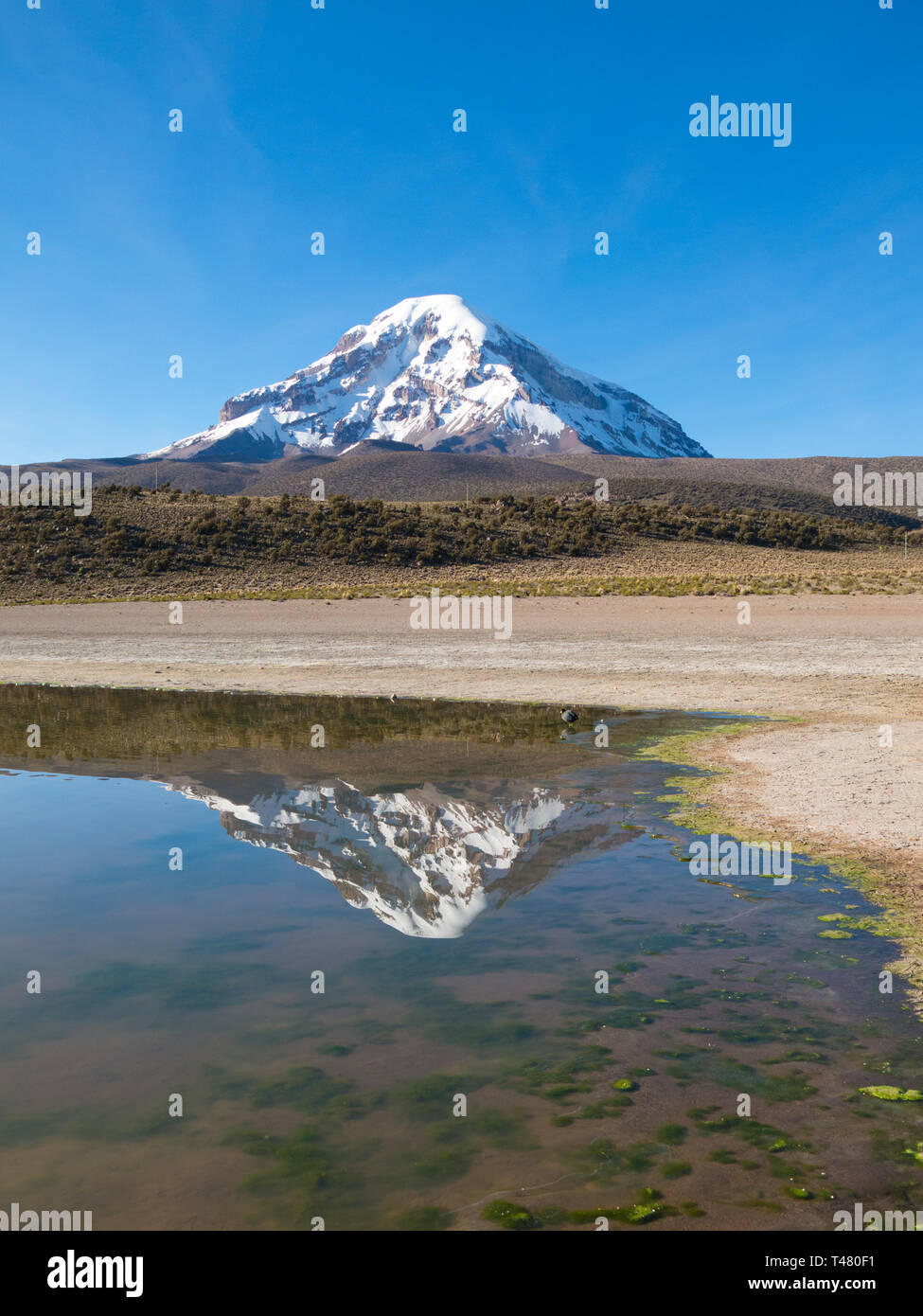 Sajama volcano and its reflection in the waters of Lake Huanacota. Sajama Natural park, Andean Bolivia - Stock Image