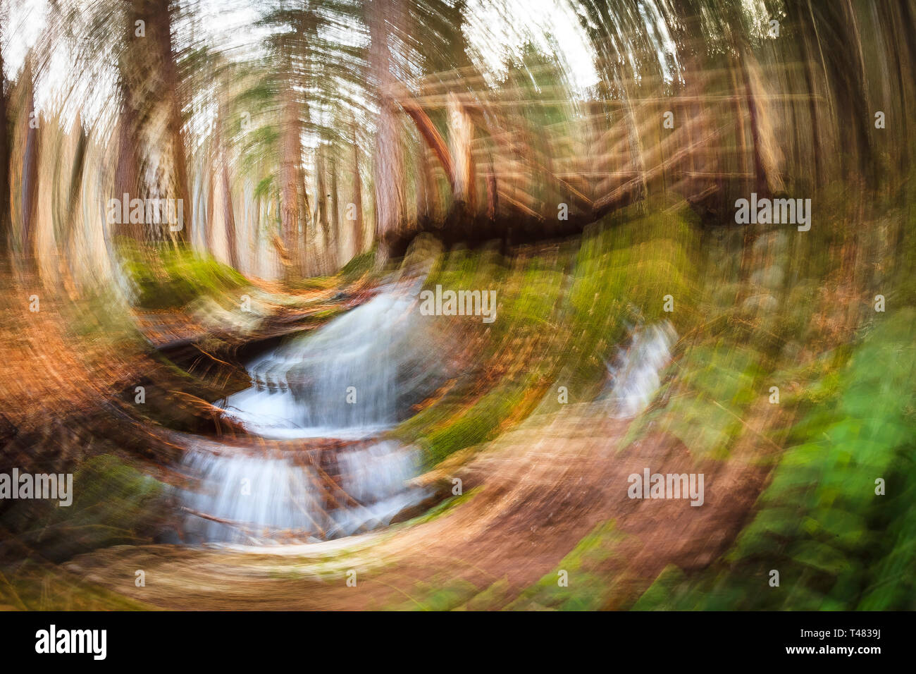 Rotational motion blur in a woodland, spinning effect - Stock Image
