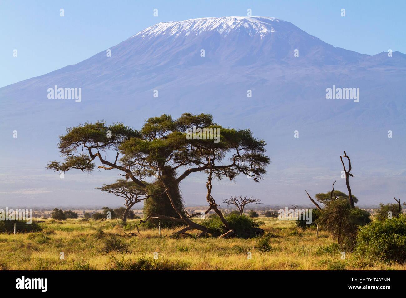 Landscape view Mount Kilimanjaro copy space Amboseli Kenya safari East Africa - Stock Image