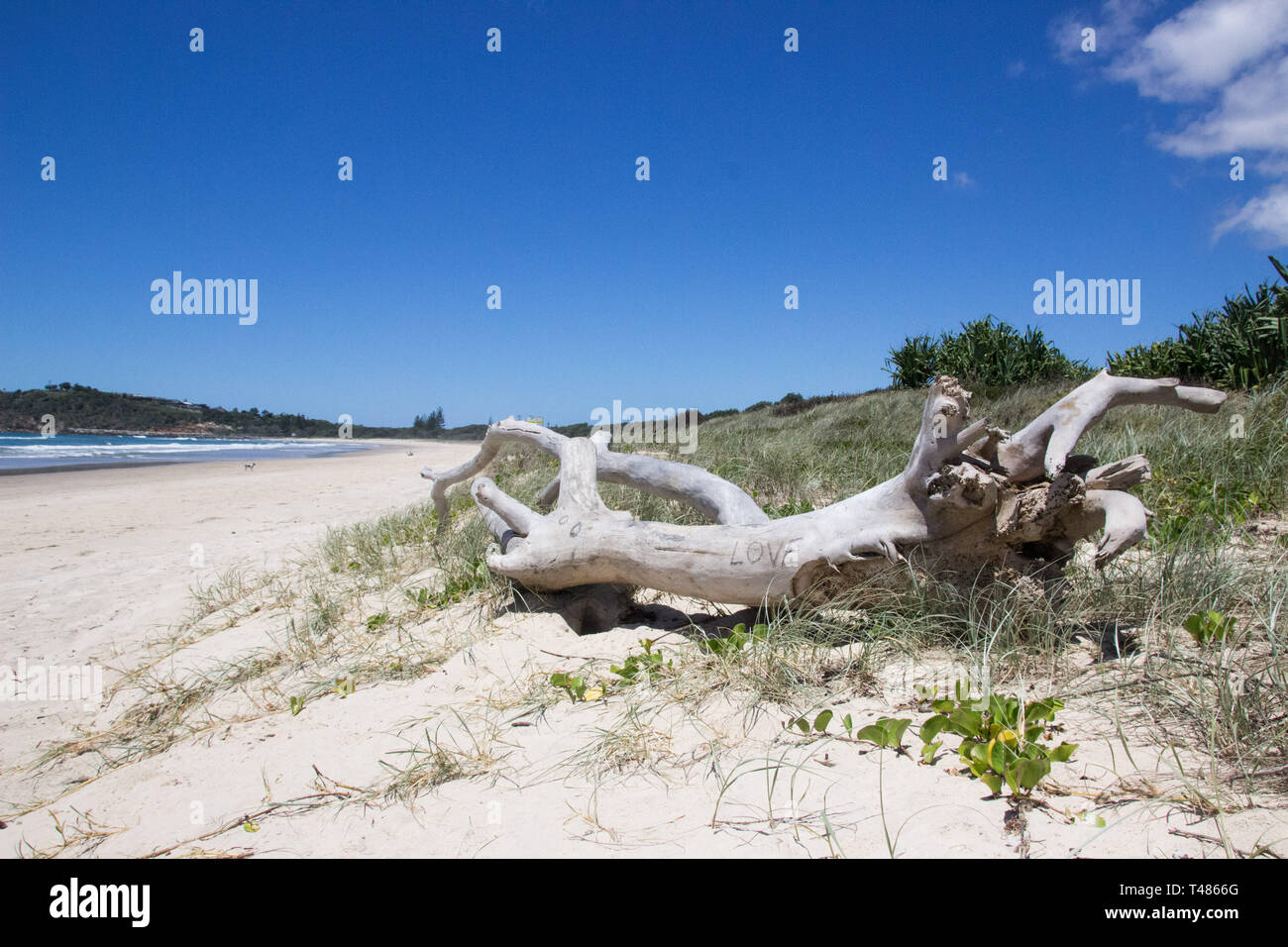 Baumstamm am Strand in Australien, all you need ist love Beschriftung - Stock Image