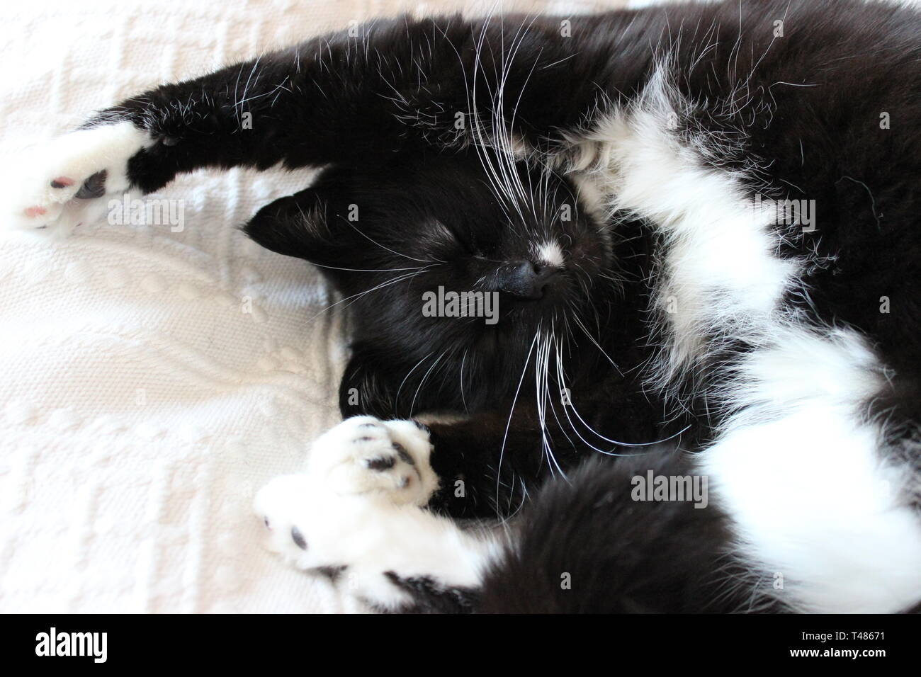 Cute cat lying on bed stretching - Stock Image