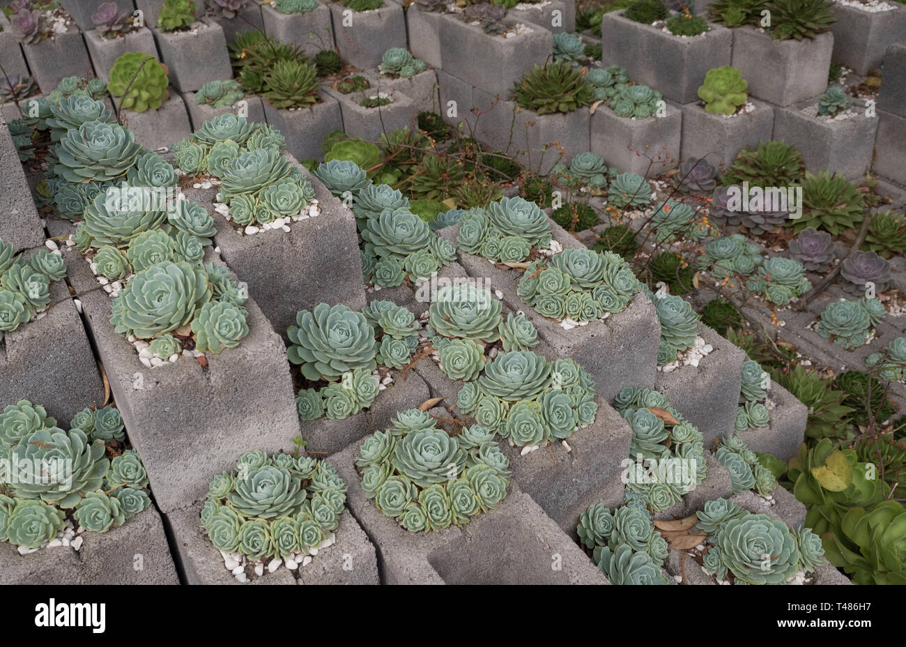 Cinder Block Garden High Resolution Stock Photography And Images Alamy