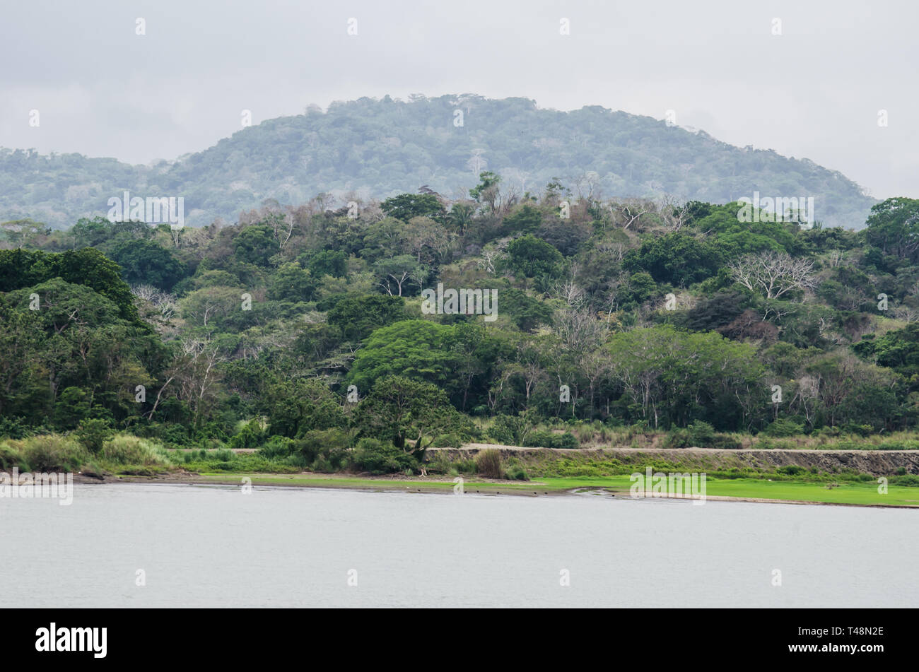 Bosque Protector de Arraiján, a protected area of the Panama Canal Watershed. - Stock Image