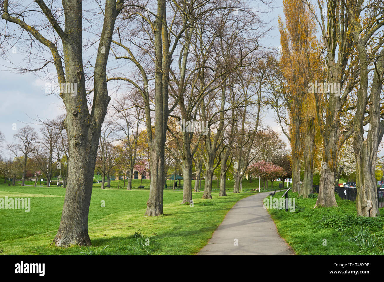 Tree-lined path in Markfield Park in springtime, South Tottenham, London UK - Stock Image