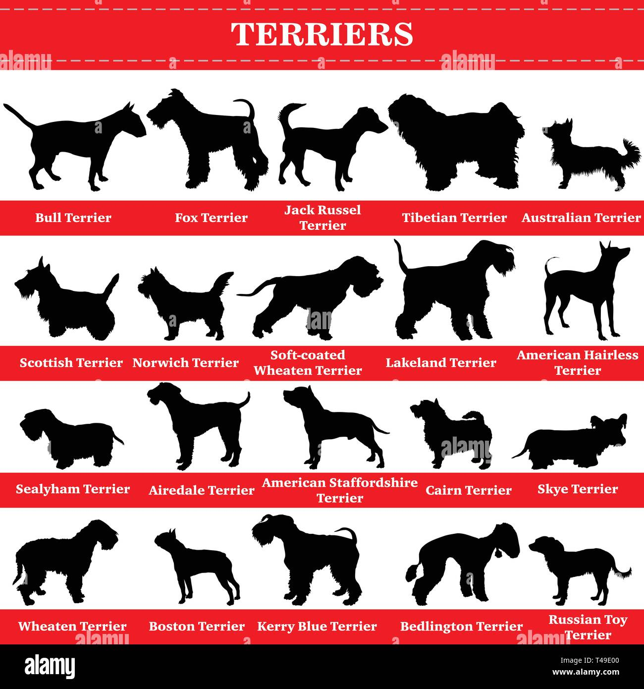 Set of 20 terrier dogs. Vector set of terrier breeds dogs standing in profile. Isolated dogs breed silhouettes set in black color on white background. - Stock Image