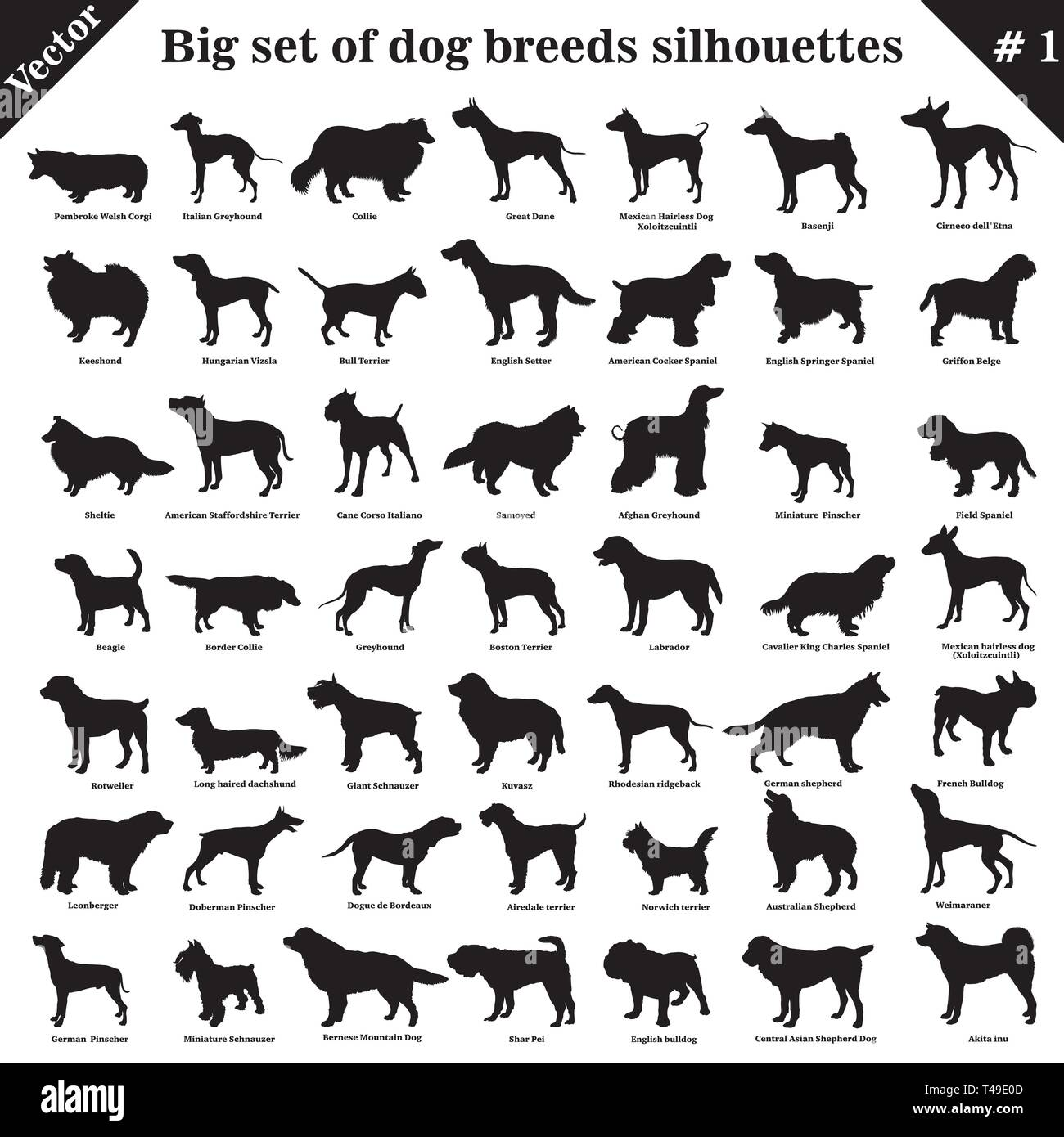 Big set of 49 different dogs, hounds, working, shepherd, terrier, companion, hunting. Vector set of different  dogs standing in profile. Isolated dogs - Stock Vector