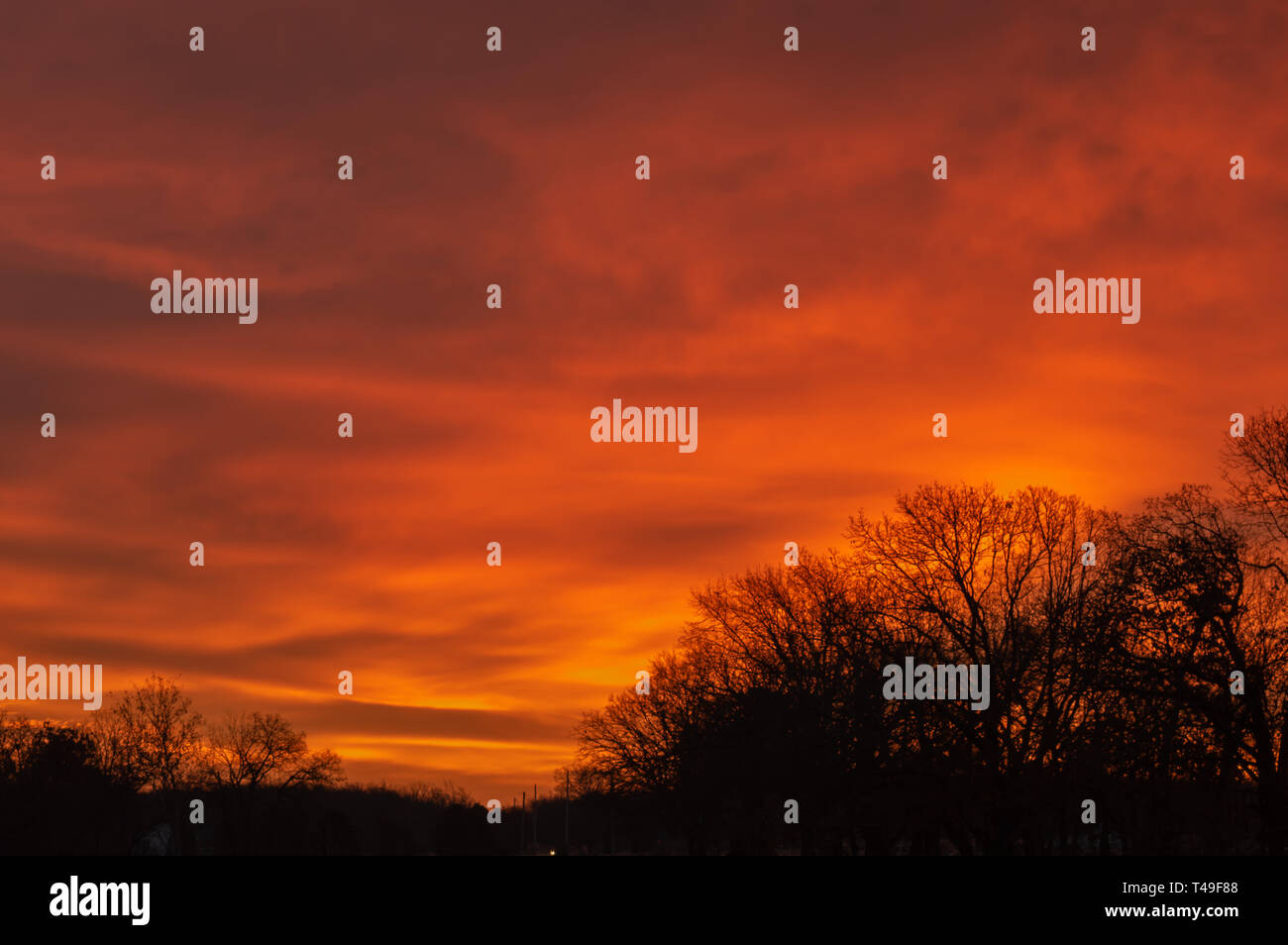 Write a message in the sky against this pretty yellow sky backdrop with silhouette tree tops. Stock Photo
