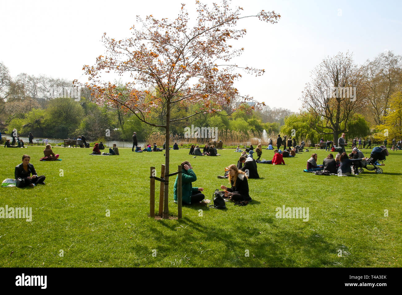 St James's Park, London, UK 15 April 2019 - People and sunbather makes the most of the warm weather in St James's Park. The weather forecast is set to be warmer for the rest of the week and the Easter weekend.  Credit: Dinendra Haria/Alamy Live News - Stock Image
