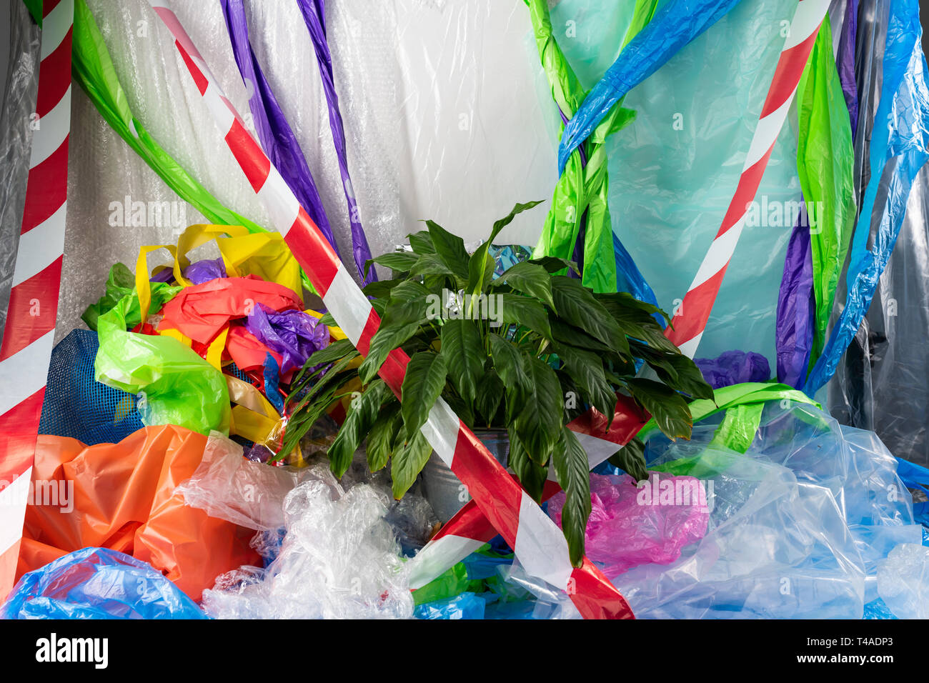 Green fresh lush plant placed in the middle of the plastic garbage - Stock Image