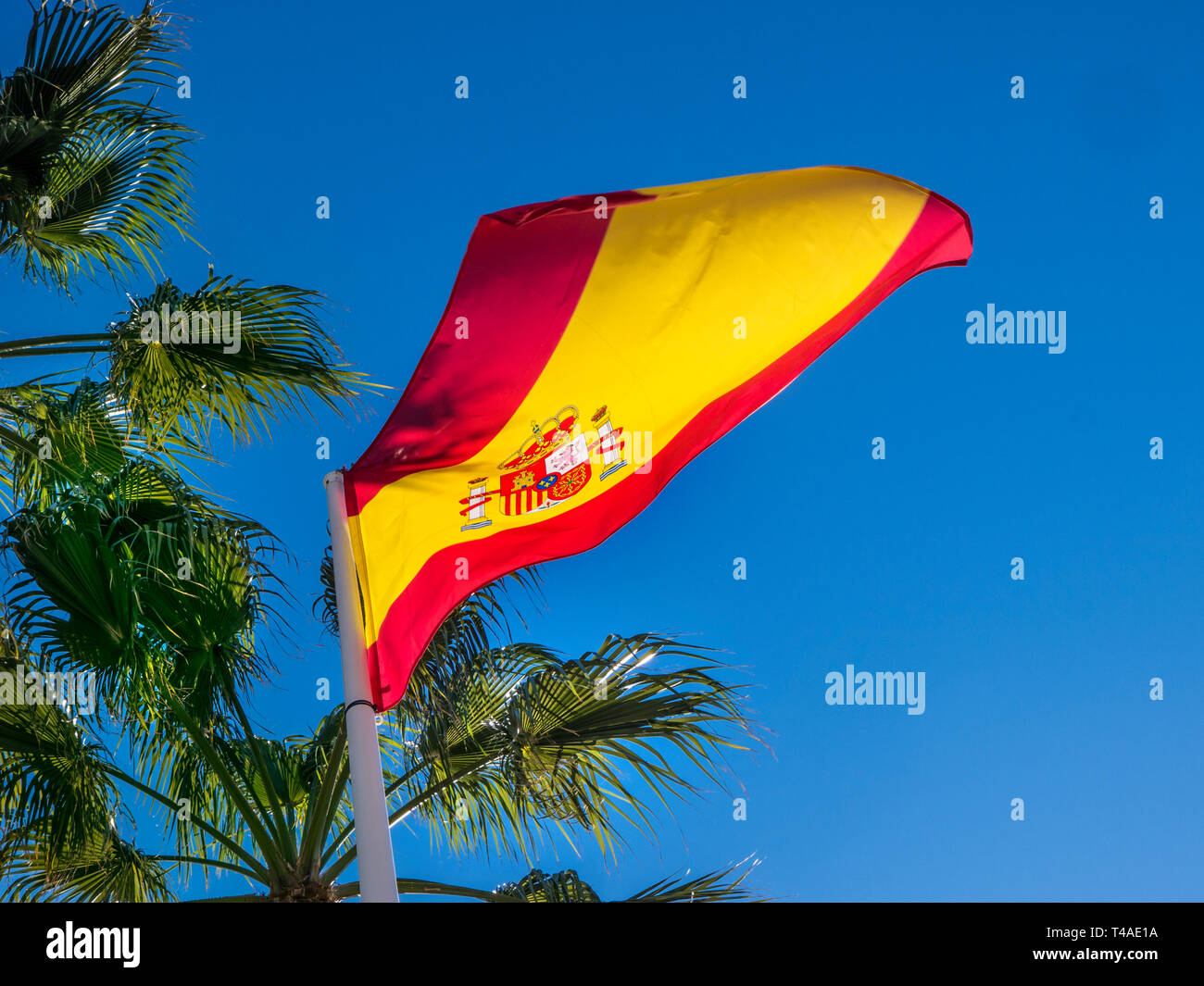 Spanish Flag undulating and unfurling in a sea breeze on flagpole with palm trees behind at San Pedro de Alcantara Malaga Costa del Sol Spain - Stock Image