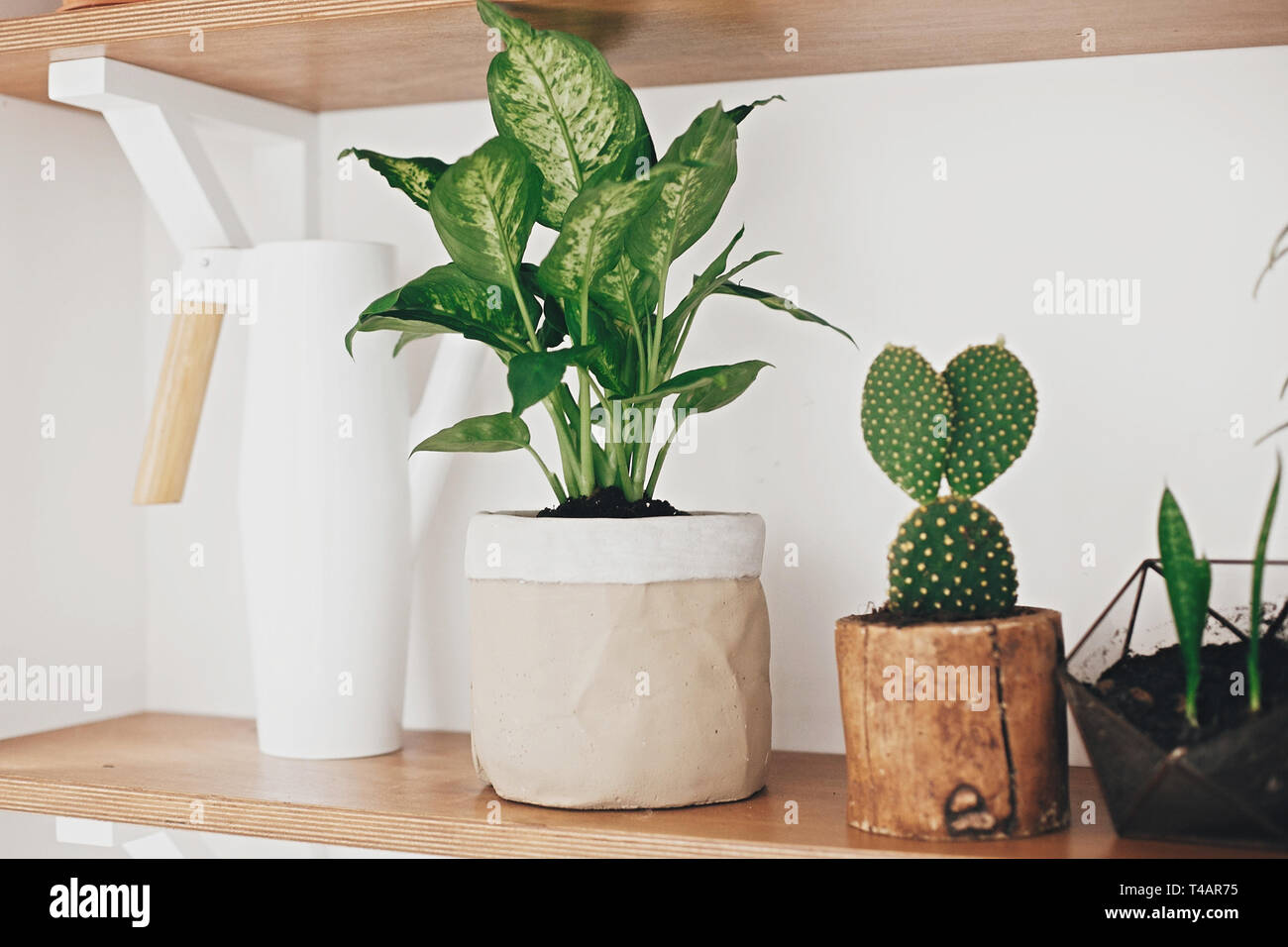Stylish Wooden Shelves With Modern Green Plants And White