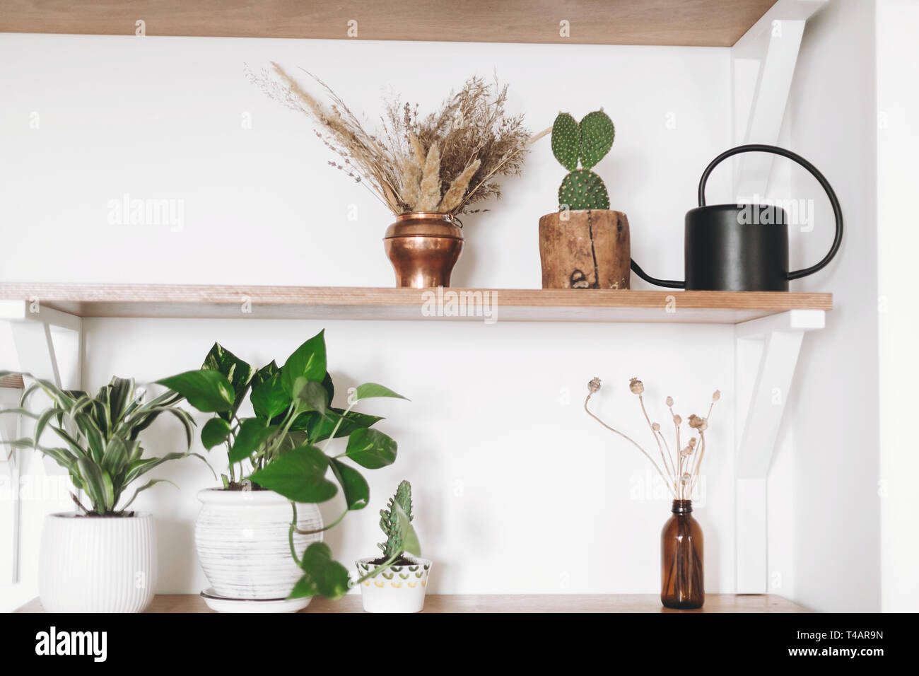 Stylish Wooden Shelves With Green Plants Black Watering Can