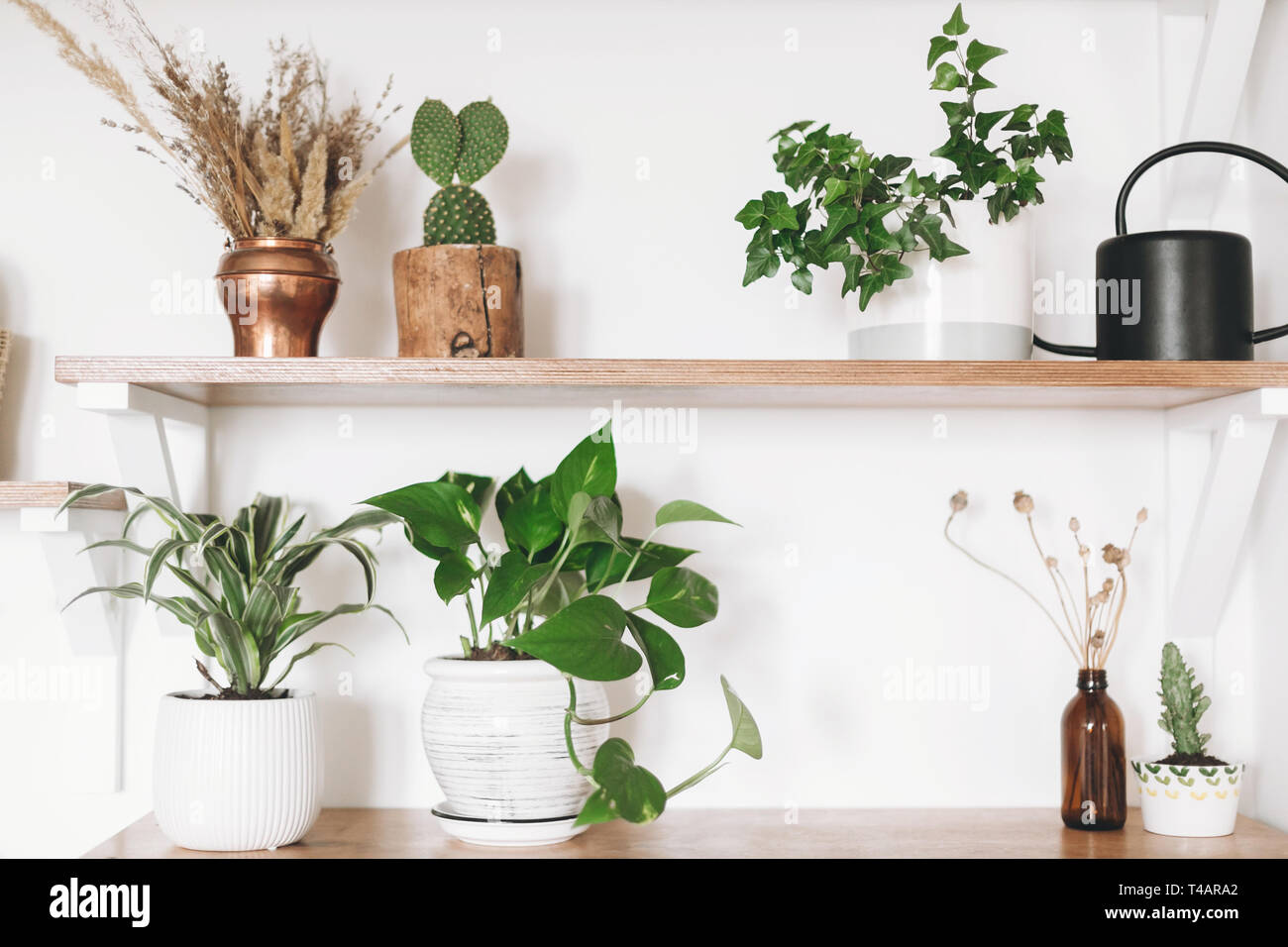 Image of: Stylish Wooden Shelves With Green Plants Black Watering Can Boho Wildflowers Modern Hipster Room Decor Cactus Epipremnum Pothos Dracaena Ivy Fl Stock Photo Alamy