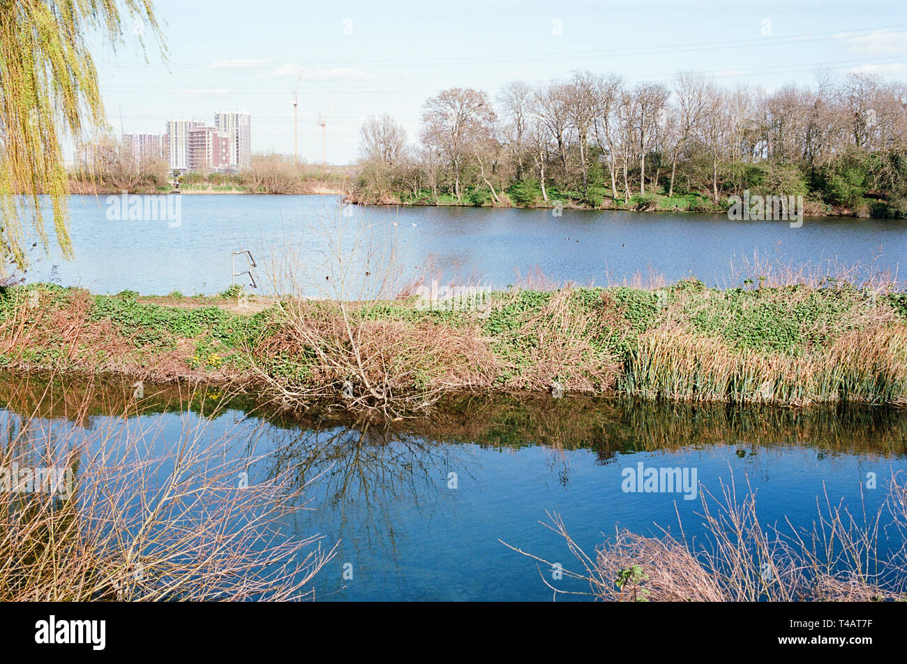 Walthamstow Wetlands, North East London UK, in springtime, with the Coppermill Stream, Reservoir No1, and apartment buildings in the distance - Stock Image