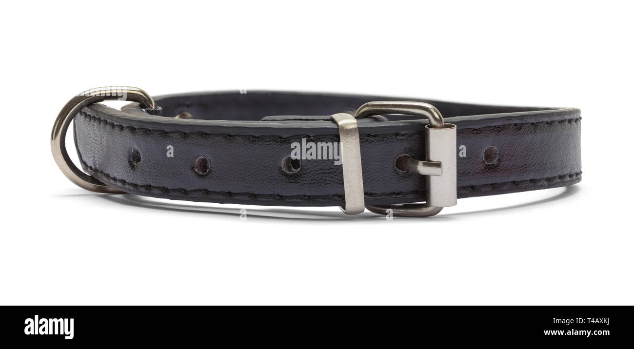 Small Black Leather Pet Collar Front View Isolated on White Background. - Stock Image