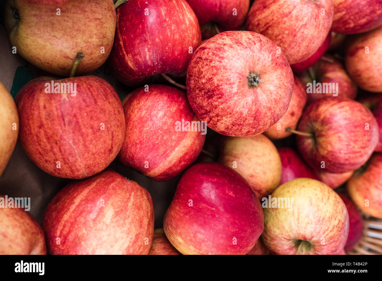 Organic English 'Cox' apples at the Waddesdon Manor Artisan Market. - Stock Image
