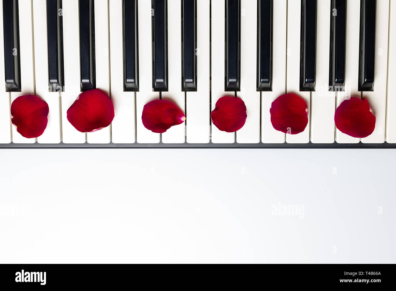 Piano keys with red rose flower petals, isolated, top view, copy space. Romantic concept. Piano or synthesizer keyboard. Classical music instrument fo - Stock Image