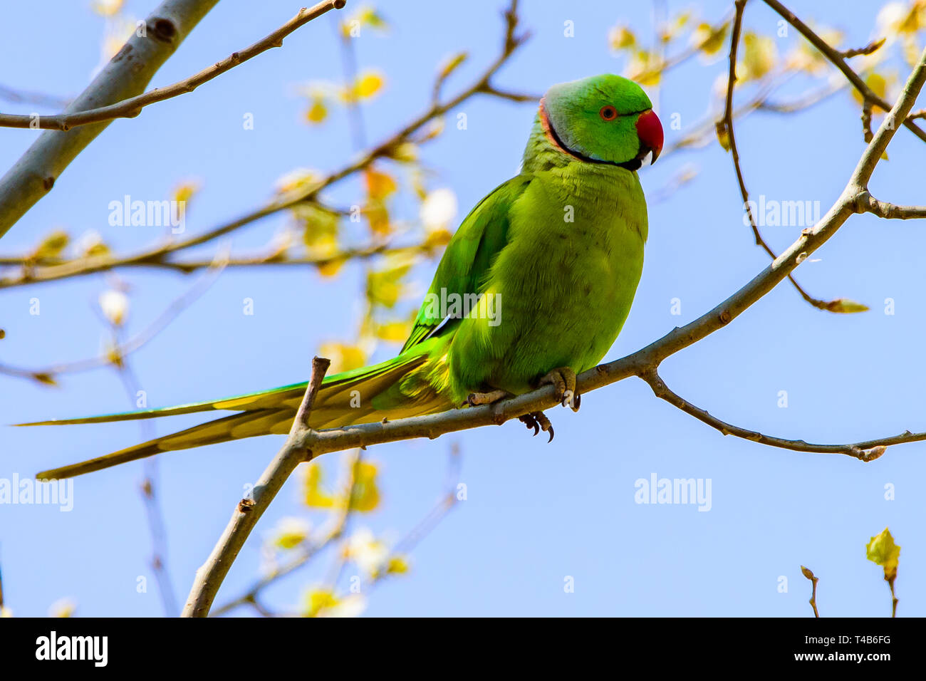 parrot perched on a  jungle branch  colorful macaw parrot Stock Photo