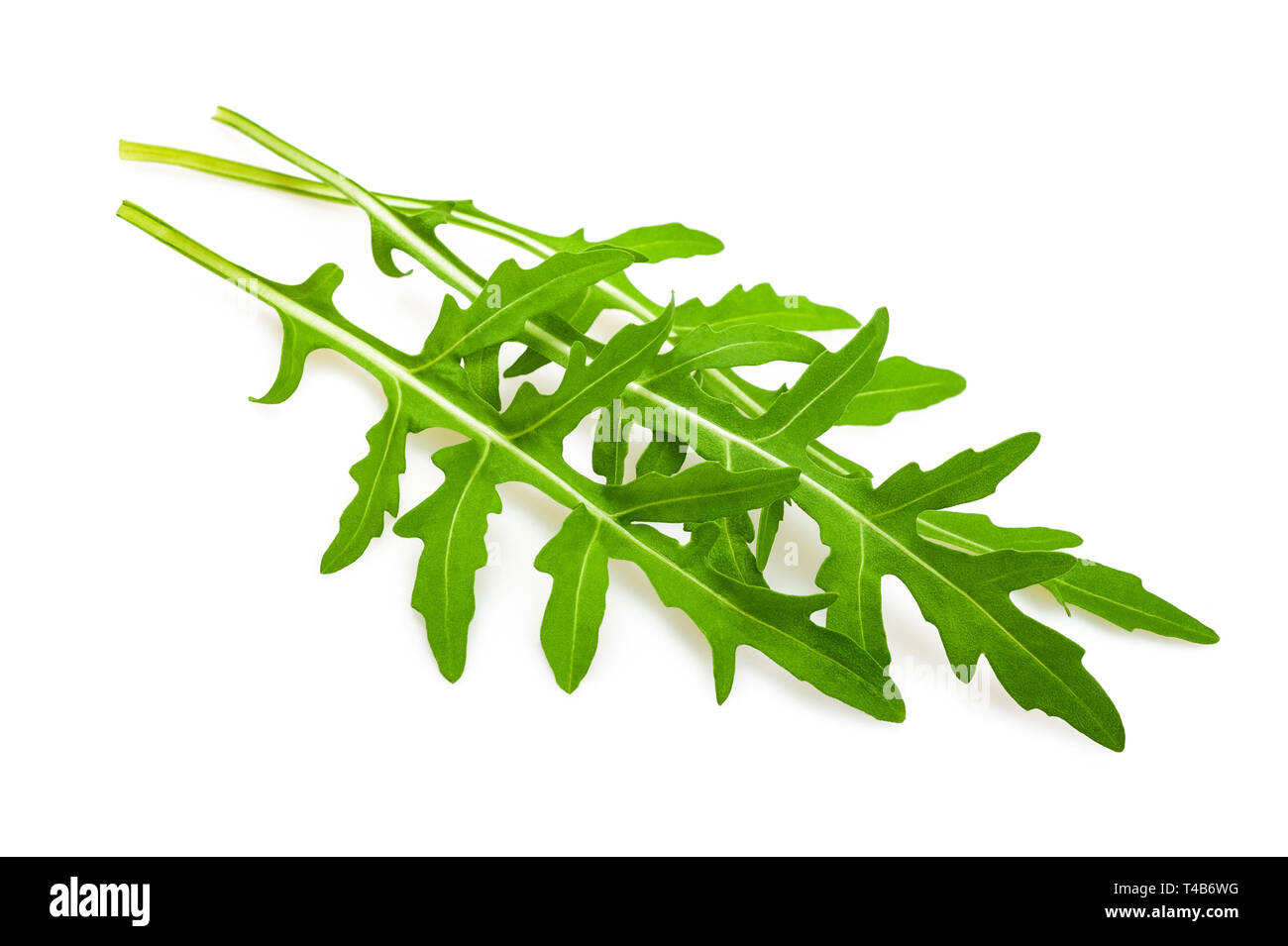 Arugula (Eruca sativa) leaves isolated on white Stock Photo