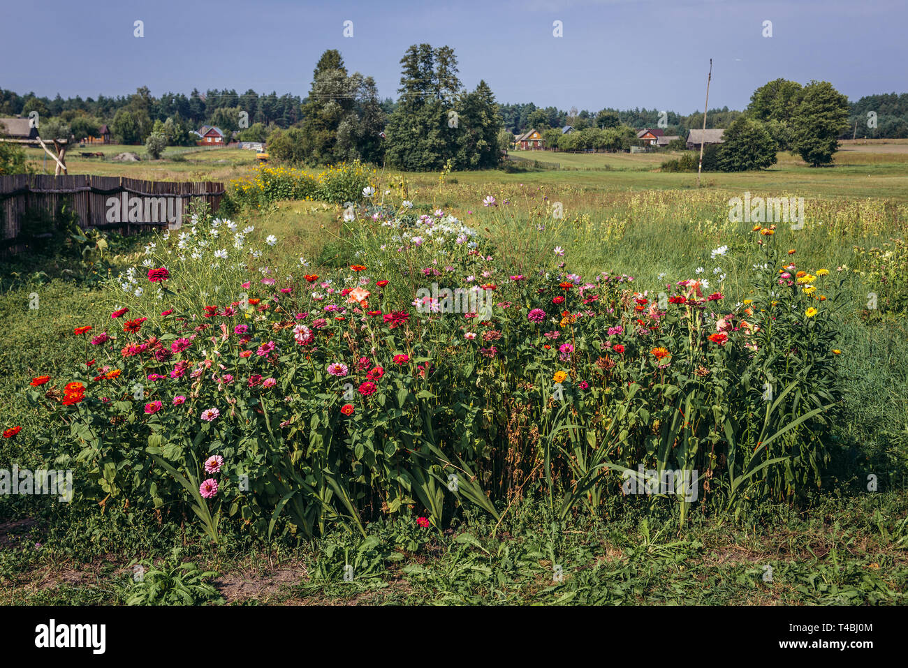 Bunch of flowers in Soce village on so called The Land of Open Shutters trail, famous for traditional architecture in Podlaskie Voivodeship, Poland - Stock Image