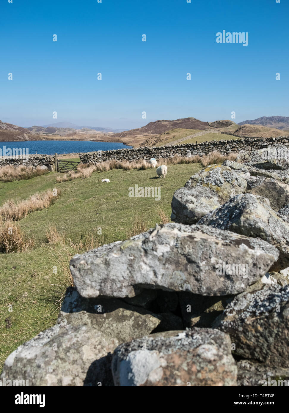 Scenic view at Cregennan Lakes, in the southern section of Snowdonia National Park, Gwynedd, Wales, UK Stock Photo