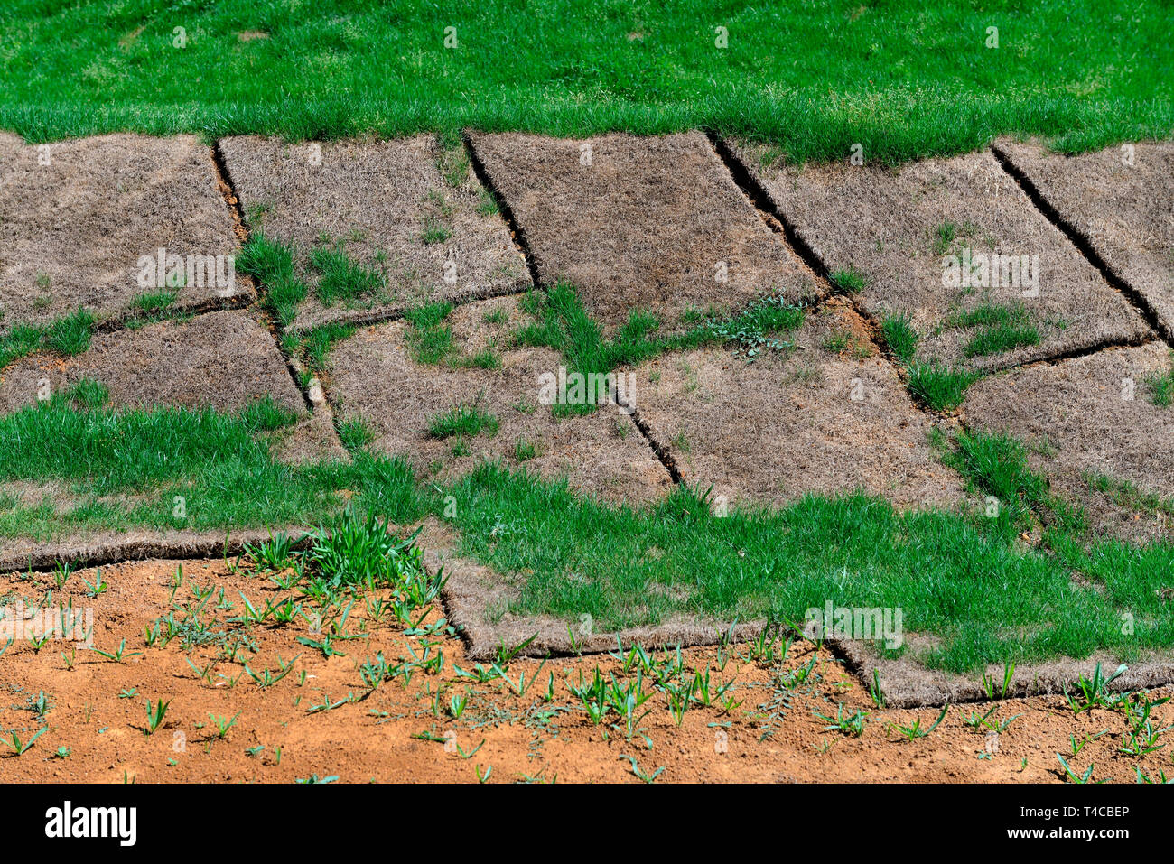 Grasrasen, vertrockneter Rollrasen Stock Photo