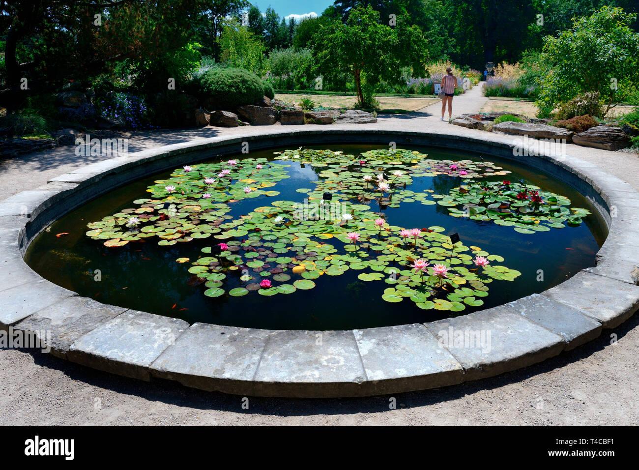 Seerosenteich, Botanischer Garten, Oxford, Oxfordshire, England, Grossbritannien - Stock Image
